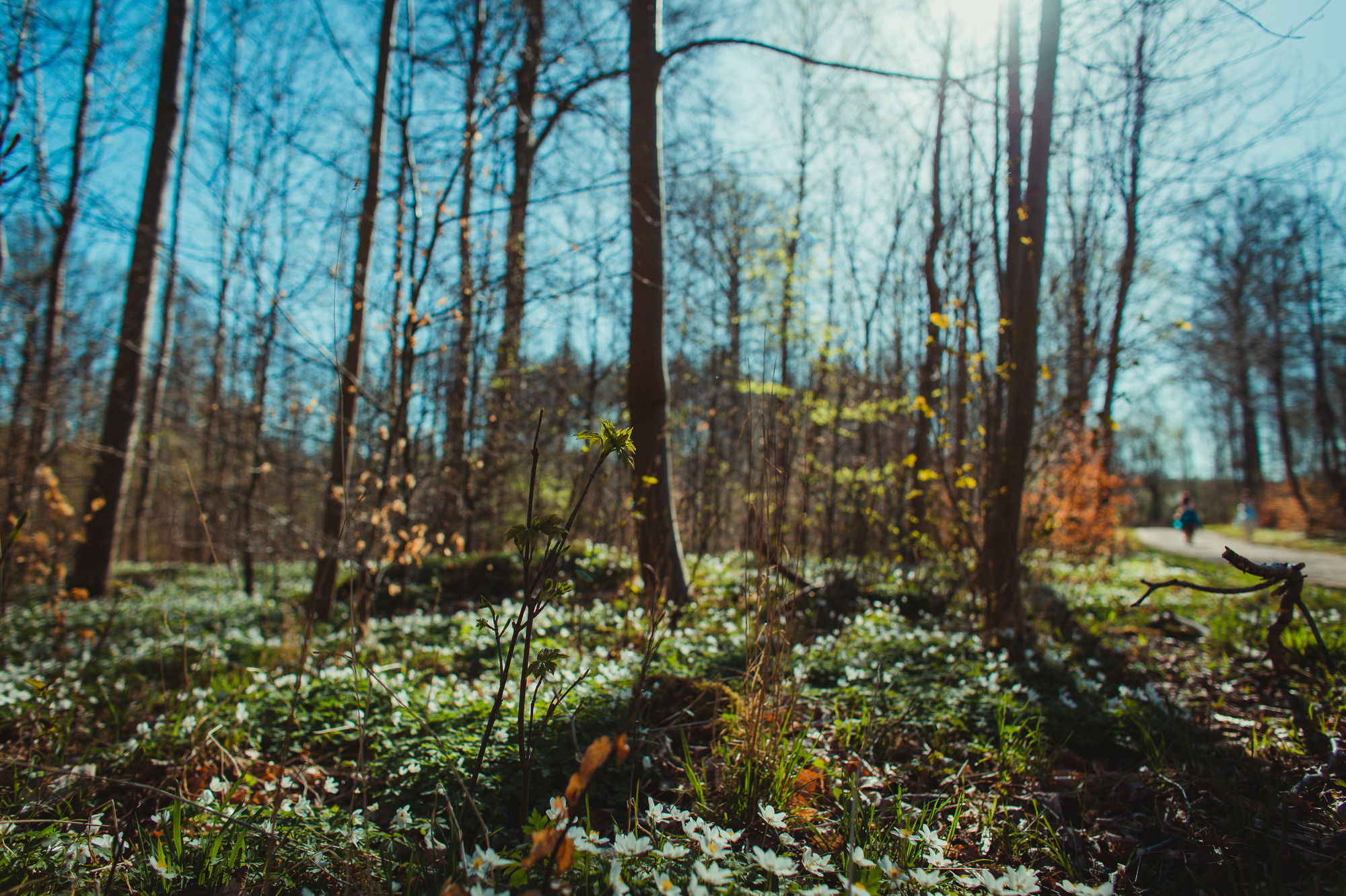 spring-nature-phtogtography