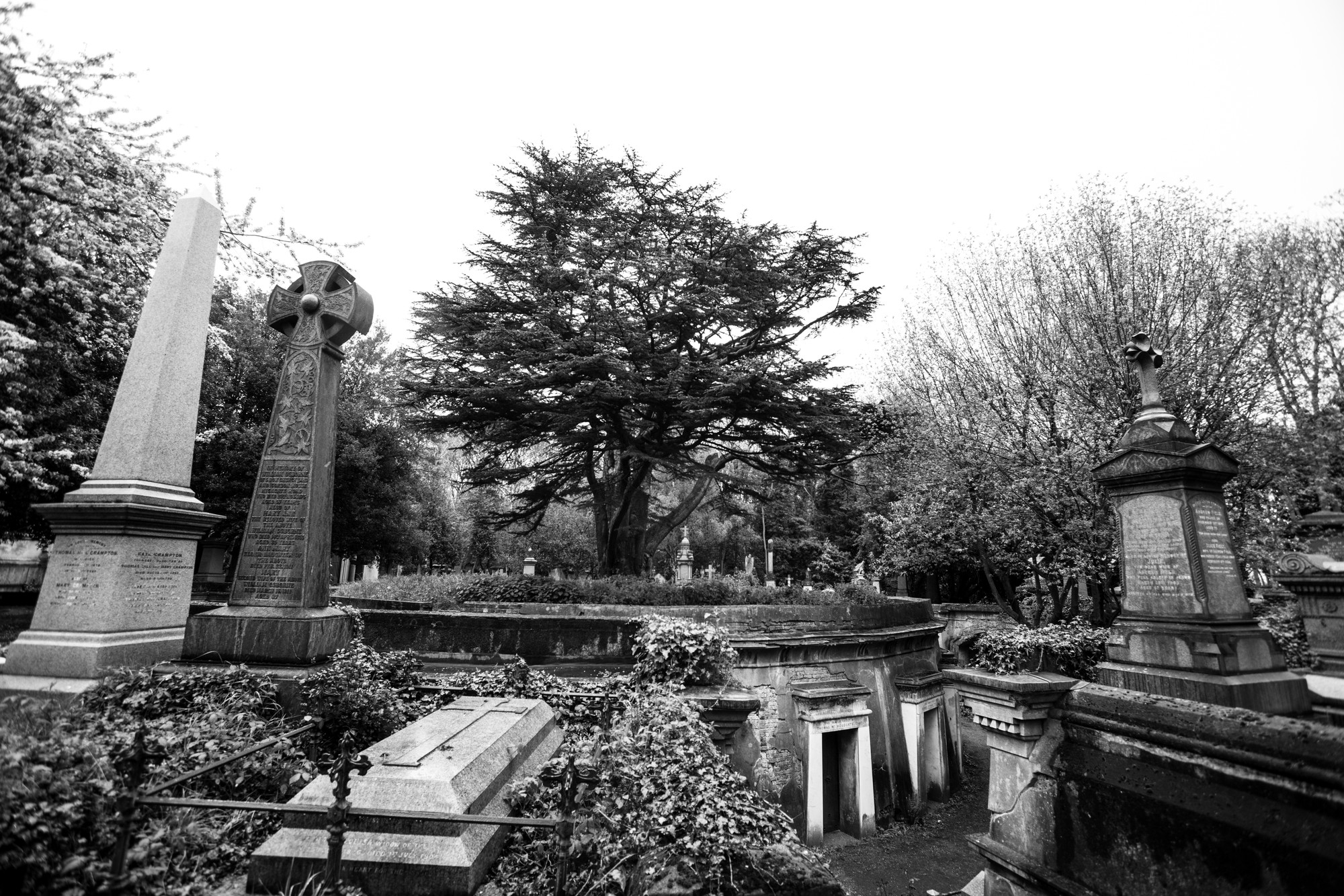 life-among-graves-highgate-cemetery