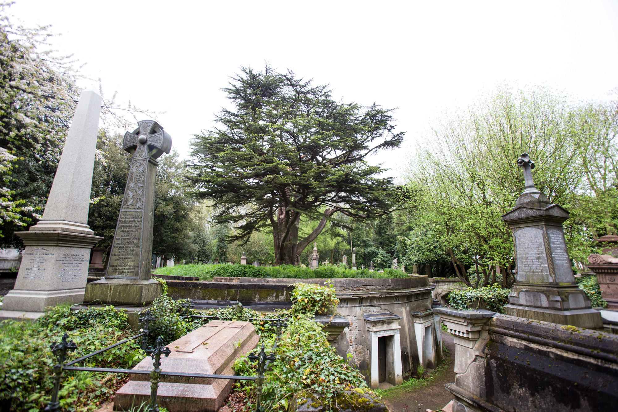 tree-of-life-highgate-cemetery