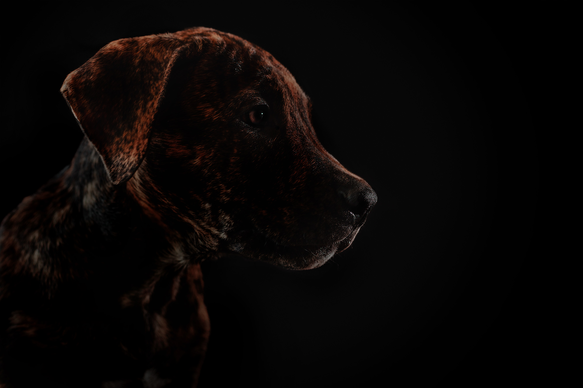 dog-photography-silhouette-lighting