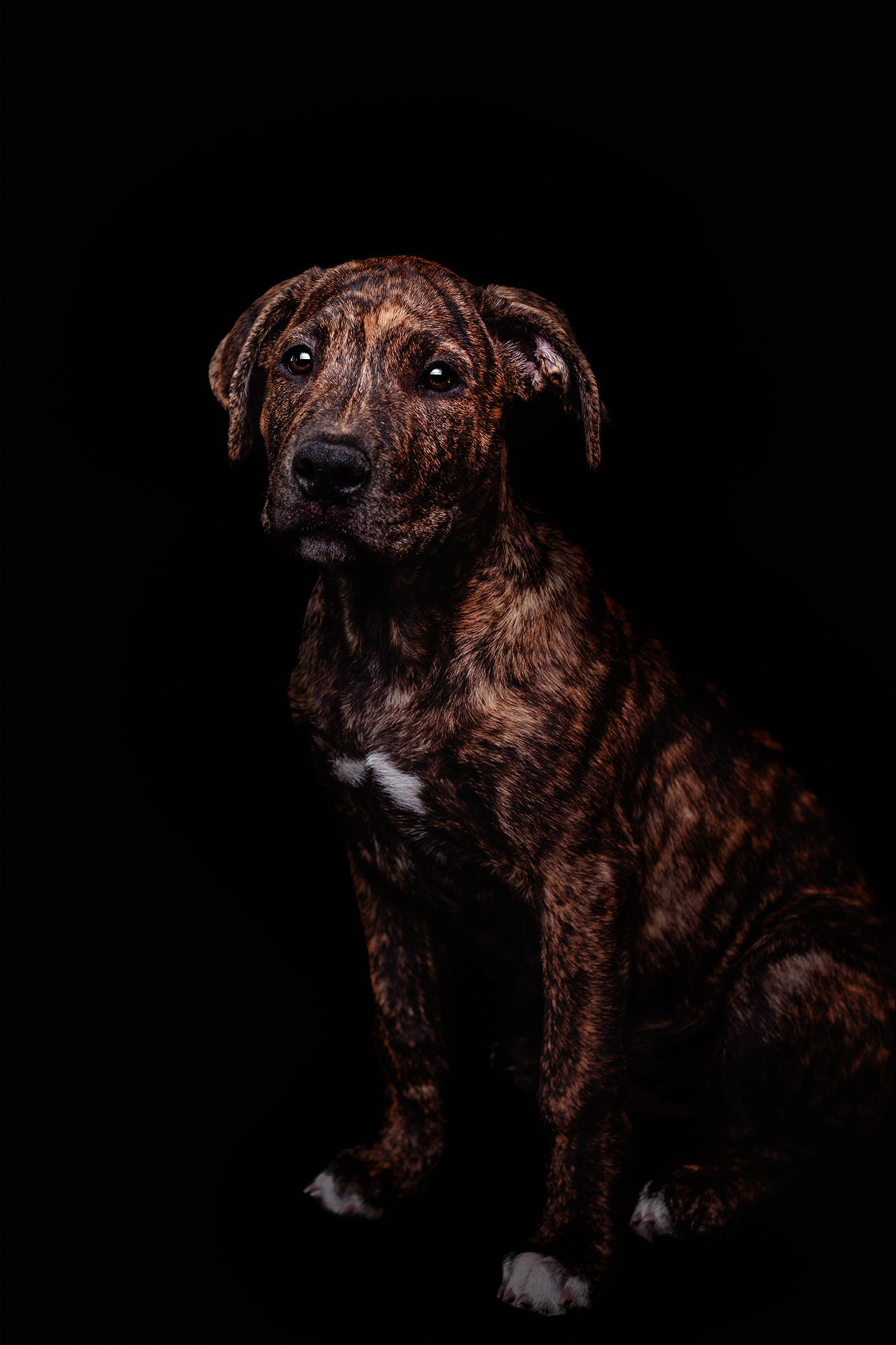 fineart-dog-photography-in-copenhagen-1