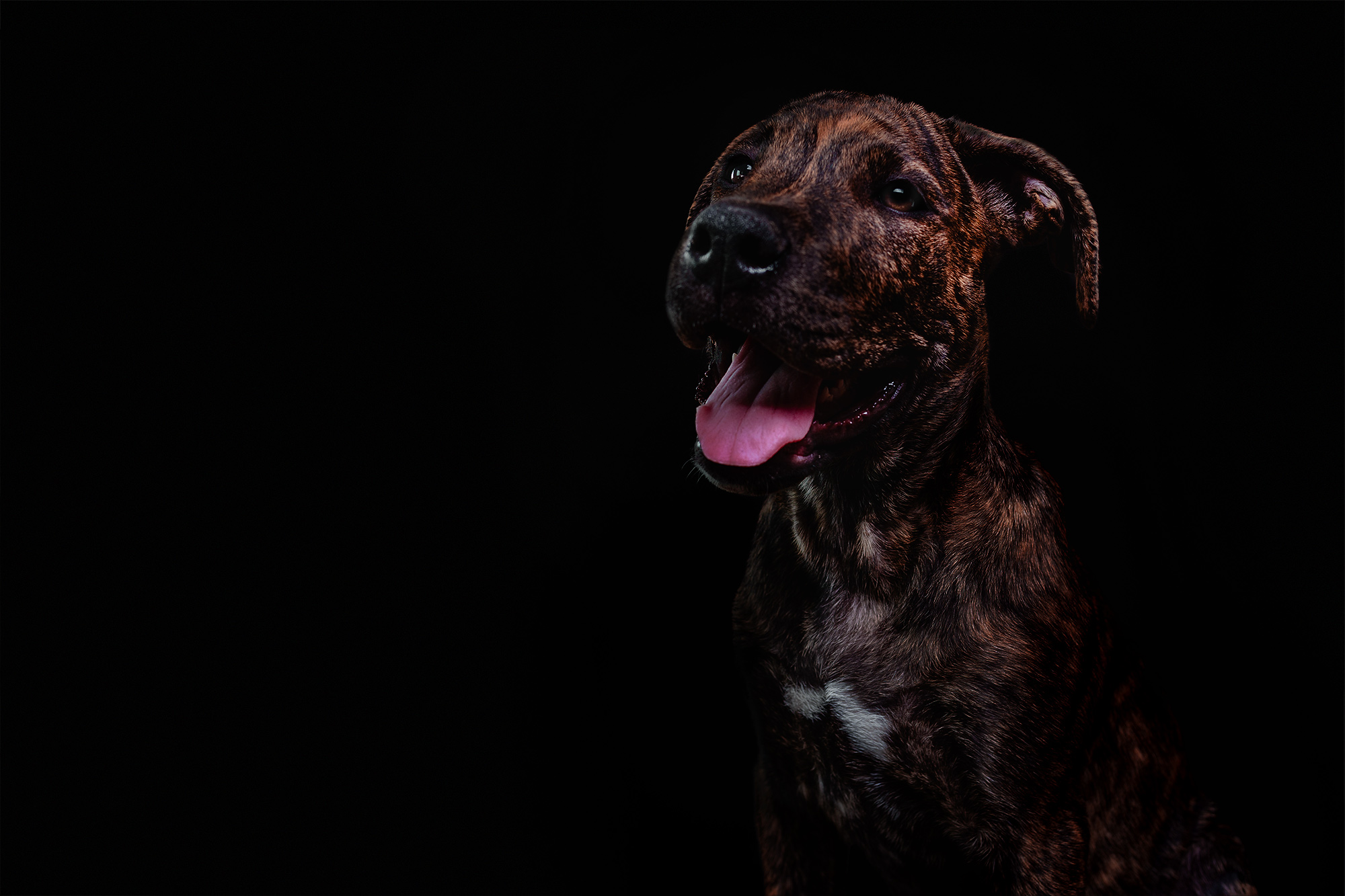 how-to-do-dog-fineart-photography