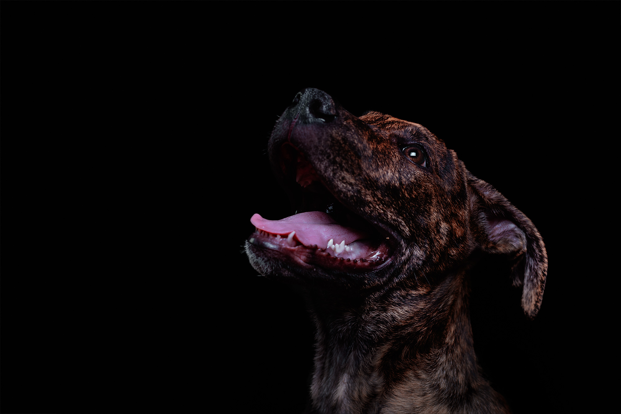 how-to-photograph-dogs-in-the-studio-1