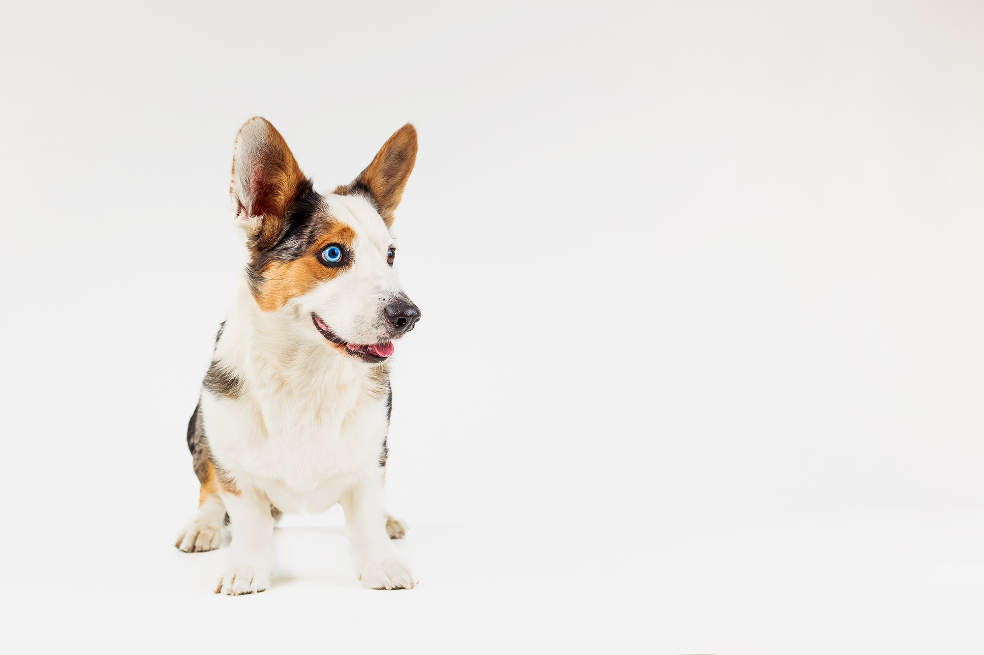 how-to-photograph-dogs