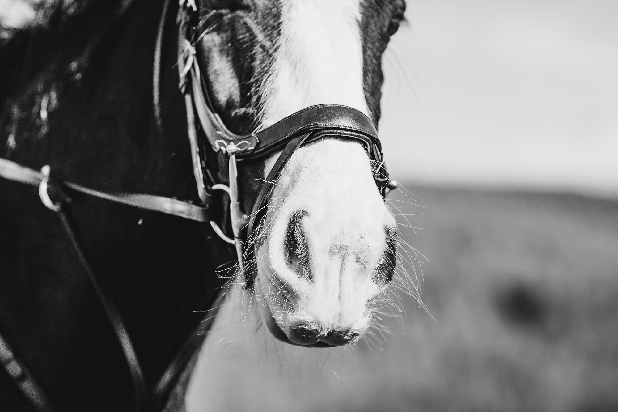 epic-horse-photography-equine-scotland007