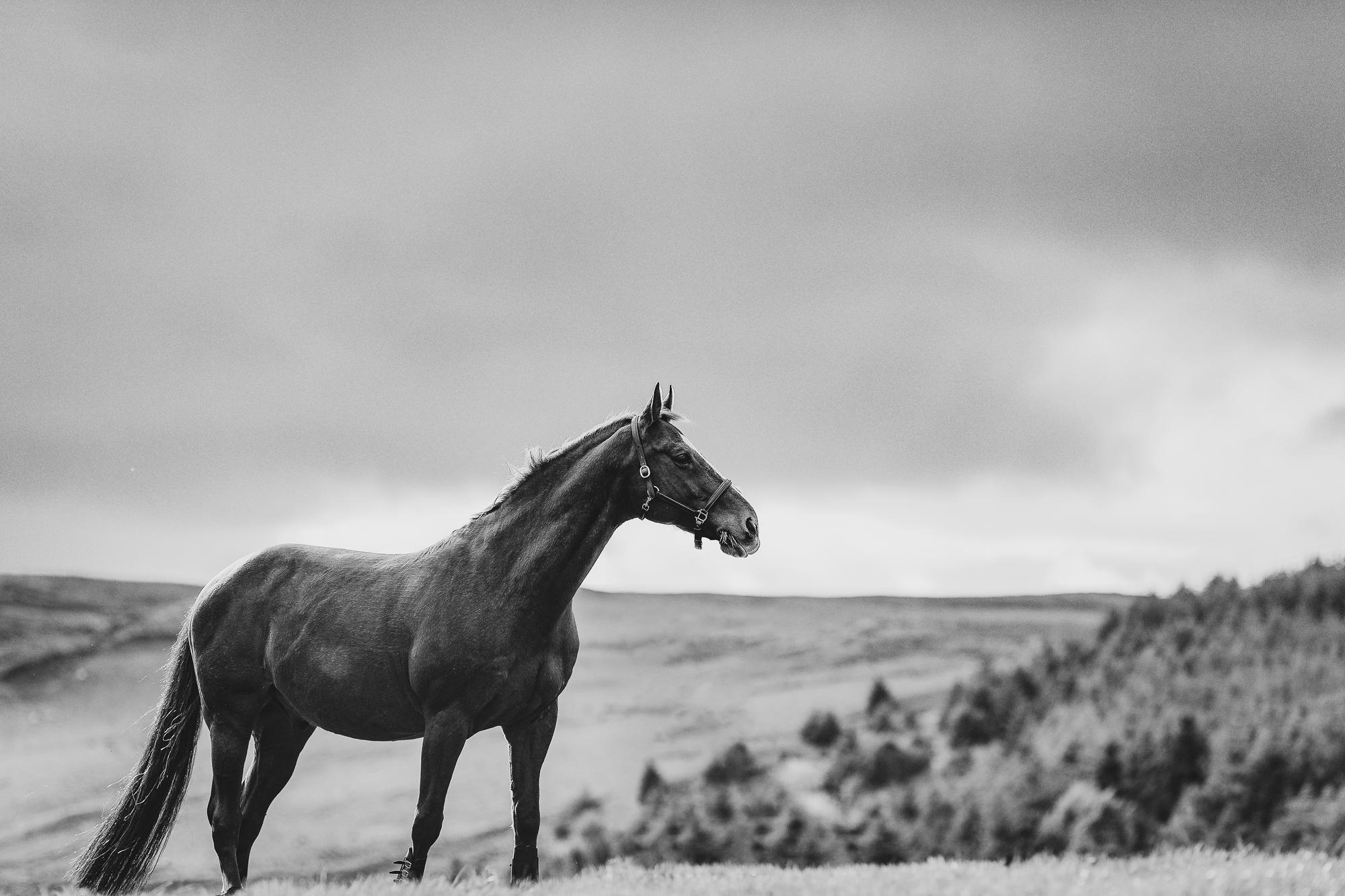 epic-horse-photography-equine-scotland037