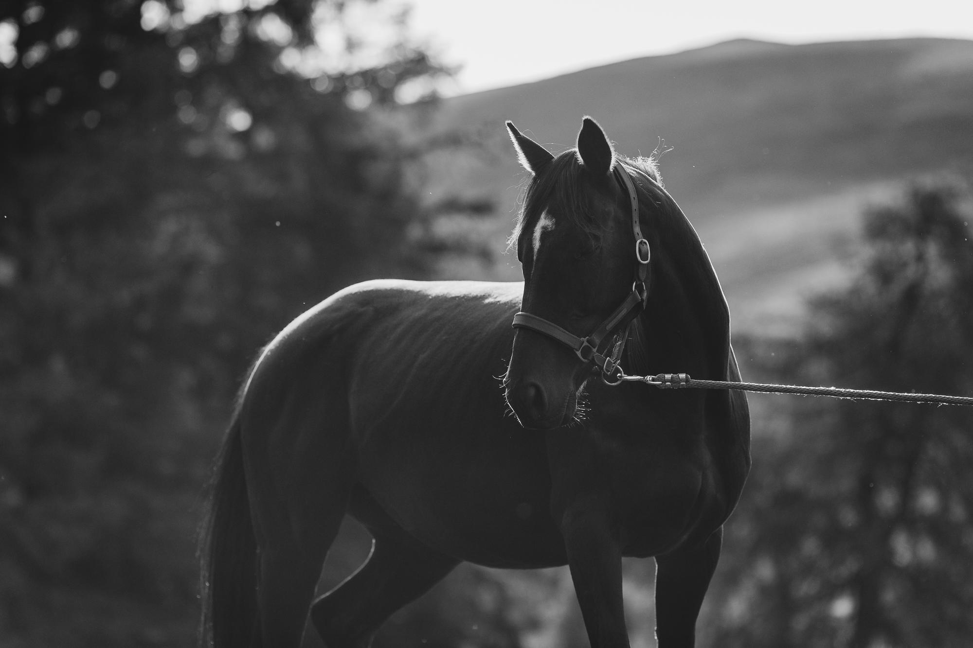 epic-horse-photography-equine-scotland042