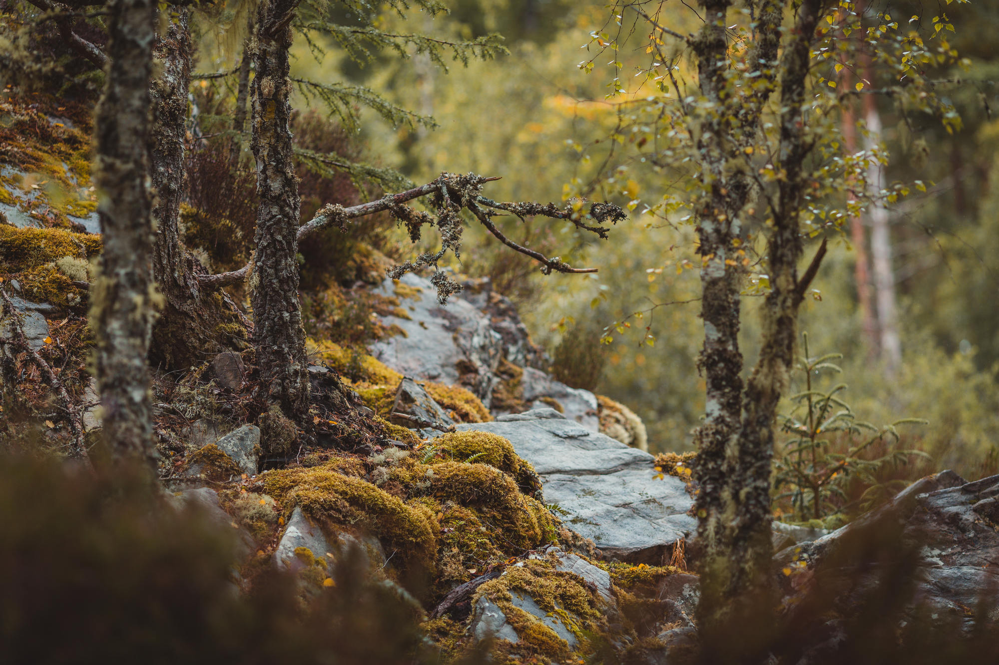 black-isle-fortrose-waterfalls-fairy-glen-16