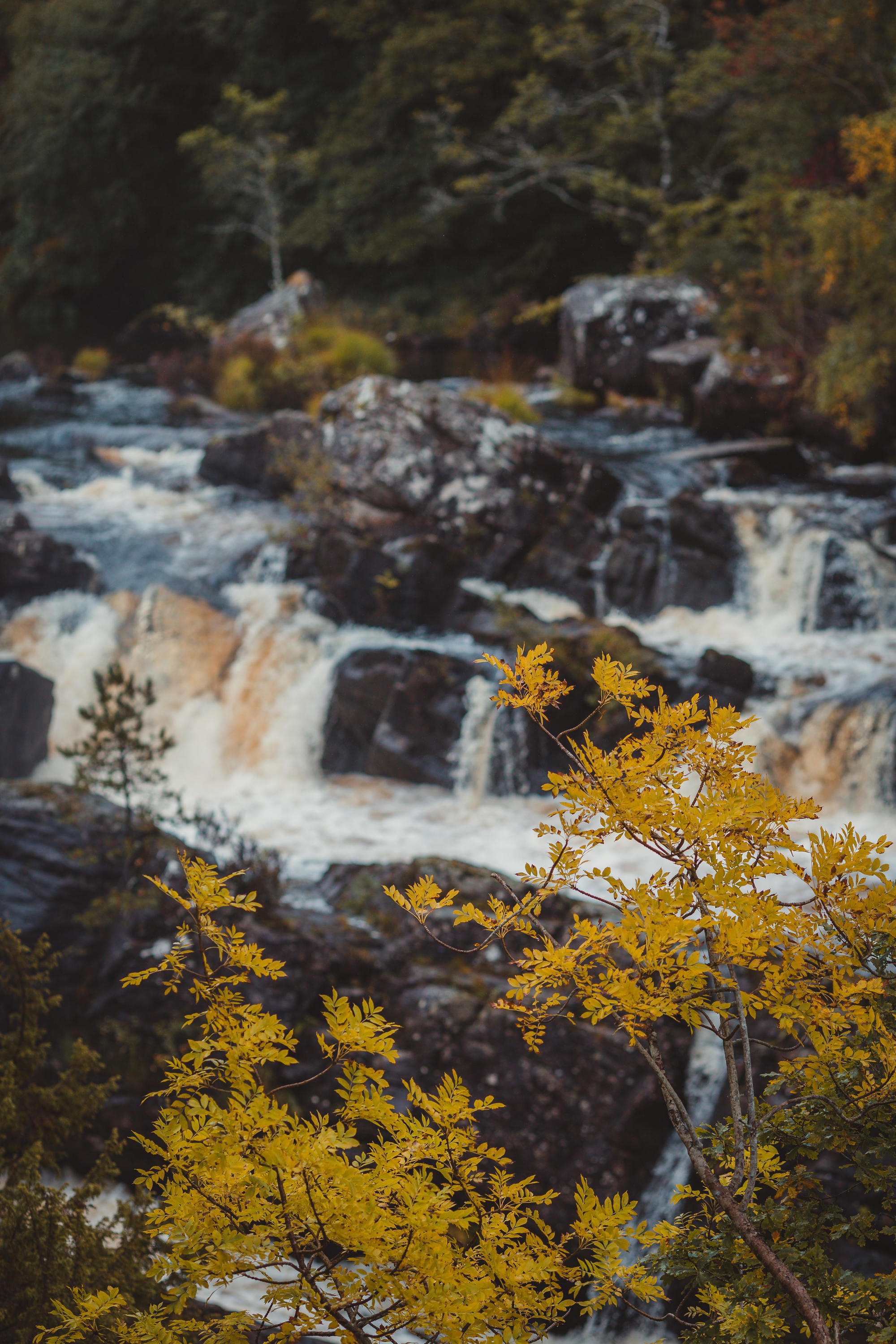 black-isle-fortrose-waterfalls-fairy-glen-18