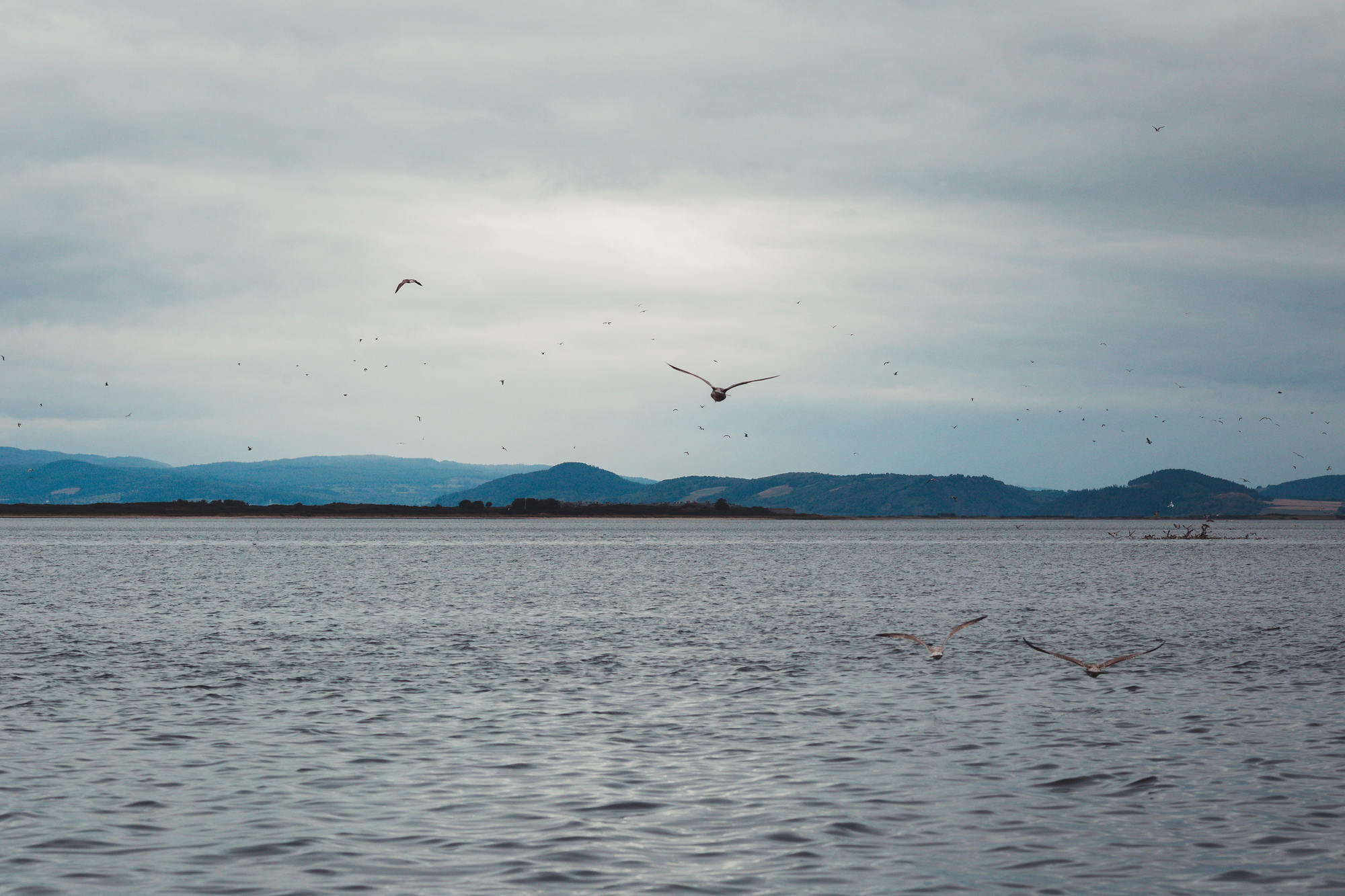 moray-firth-dolphins-phoenix-boats-04