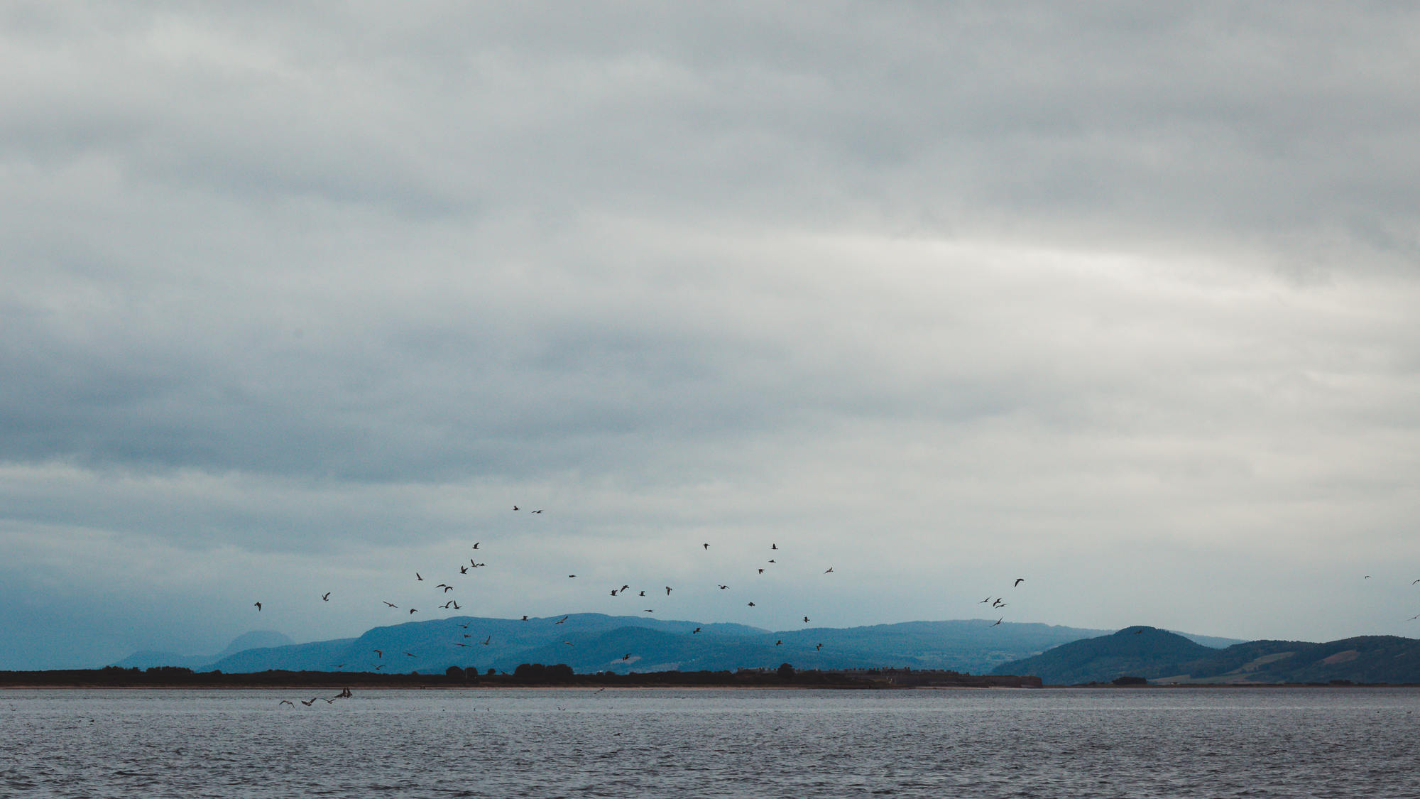 moray-firth-dolphins-phoenix-boats-05