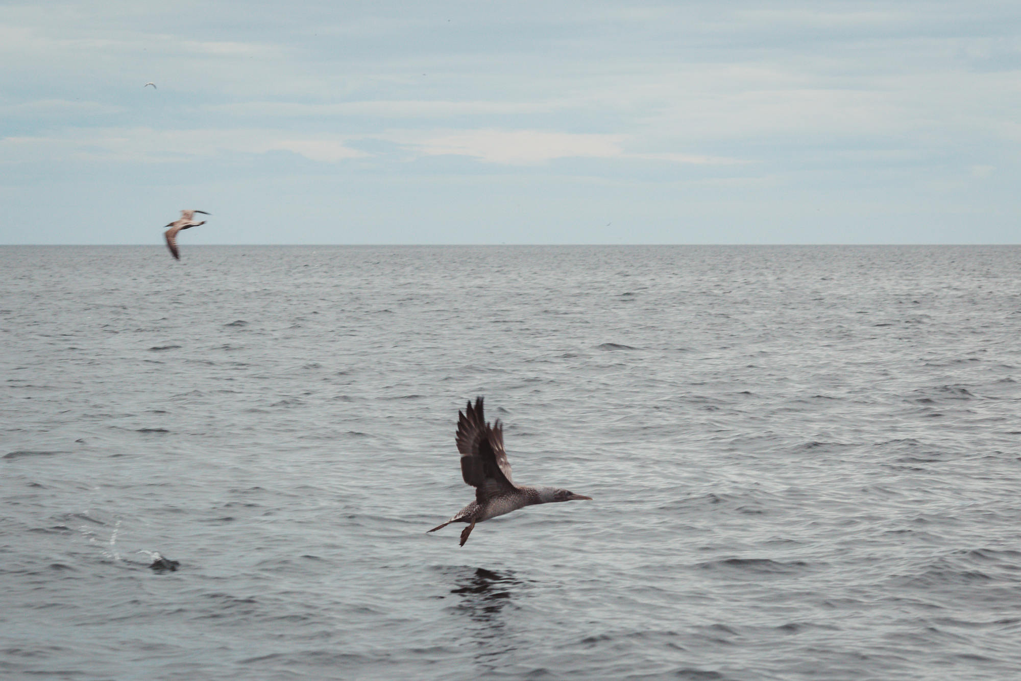 moray-firth-dolphins-phoenix-boats-07