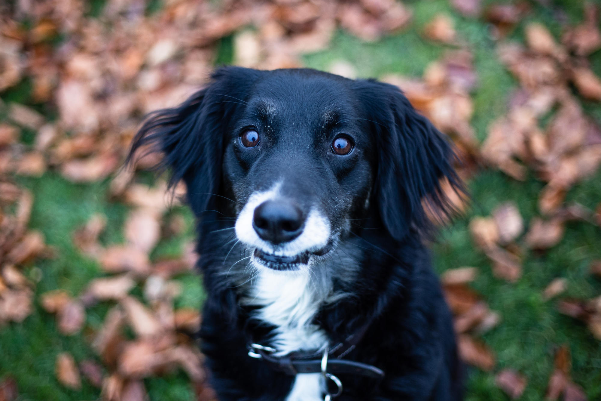 dyrevaernet-dogs-for-adoption-copenhagen-3