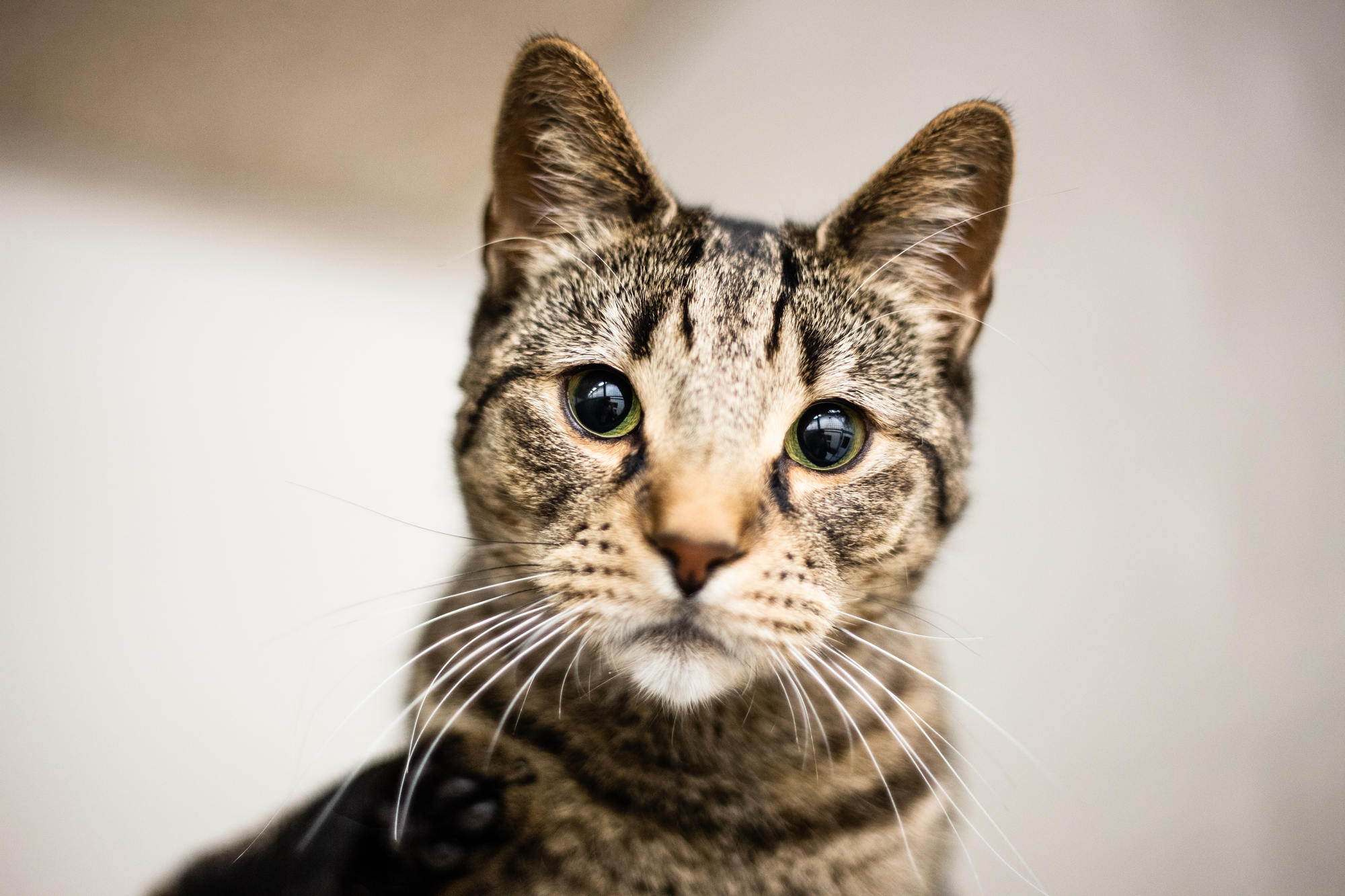 pet-photography-copenhagen-cat-adoption-dyrevaernet-2