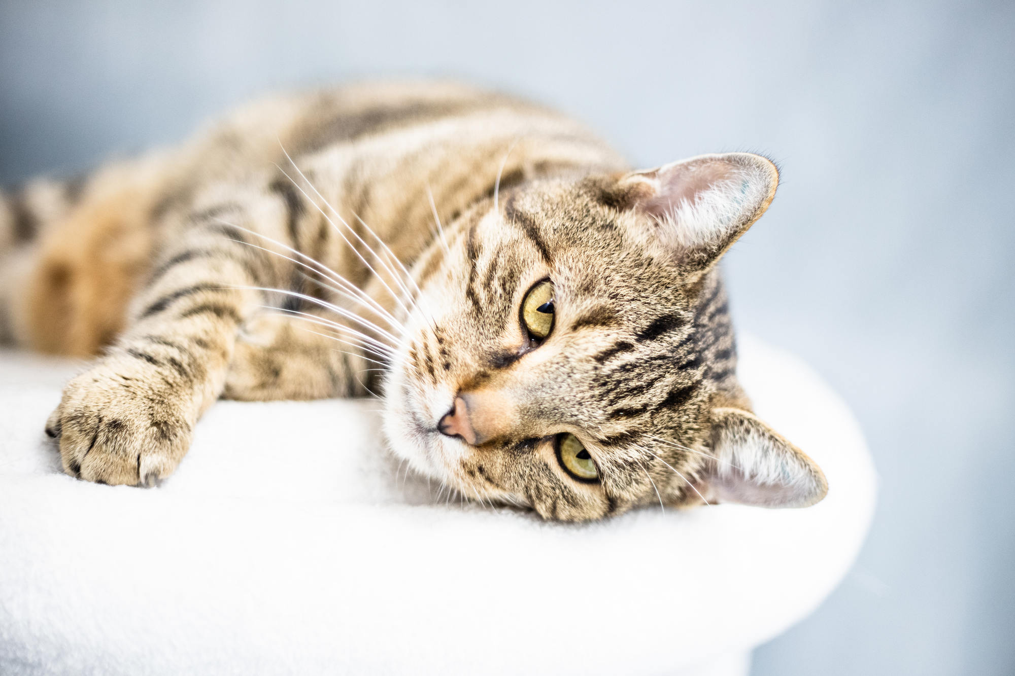 pet-photography-copenhagen-cat-adoption-dyrevaernet-5-1