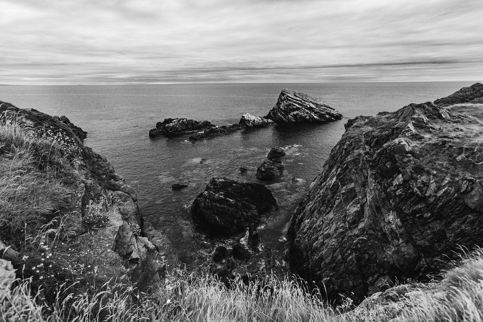 bow-fiddle-rock-island-birds