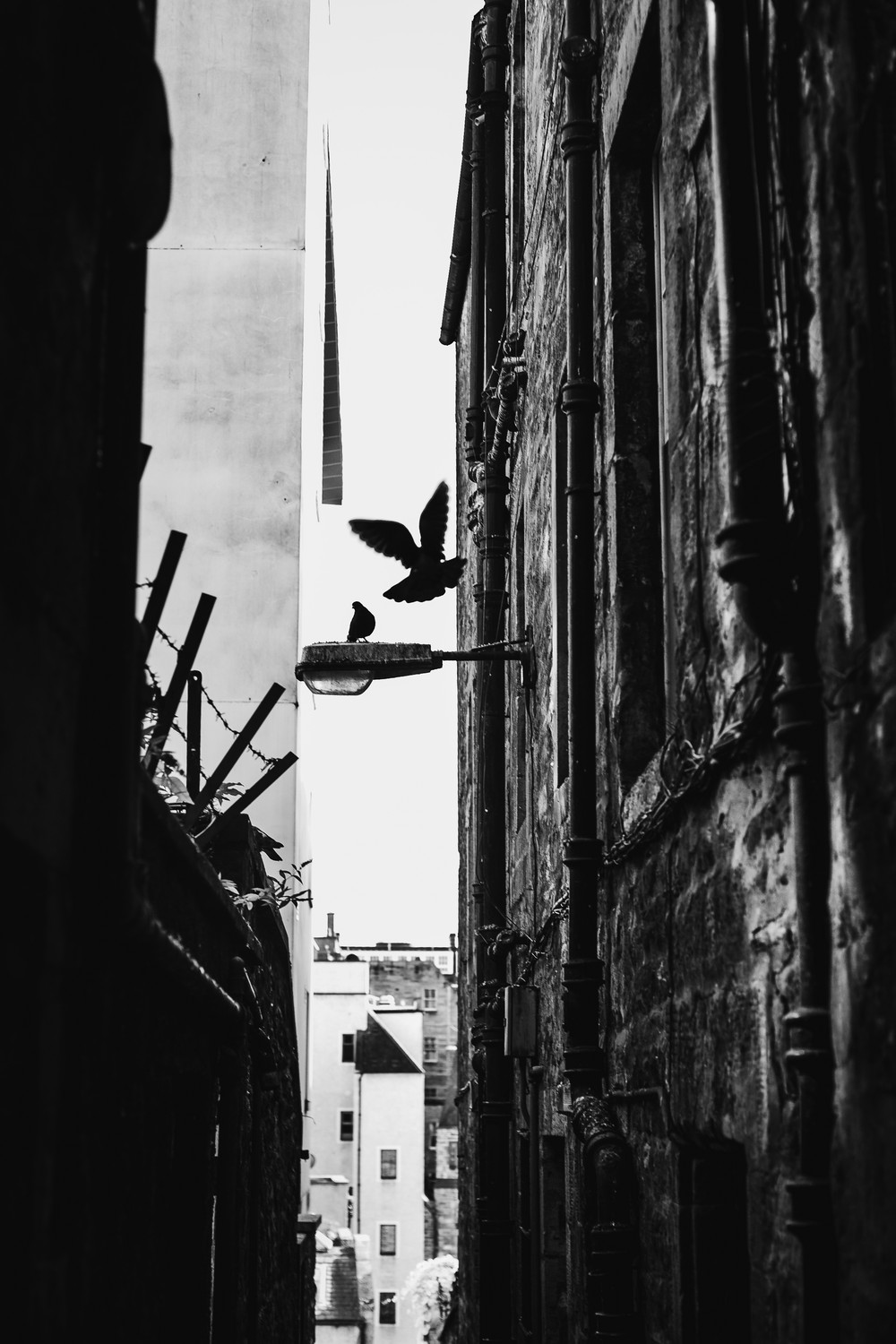 edinburgh-close-pidgeon