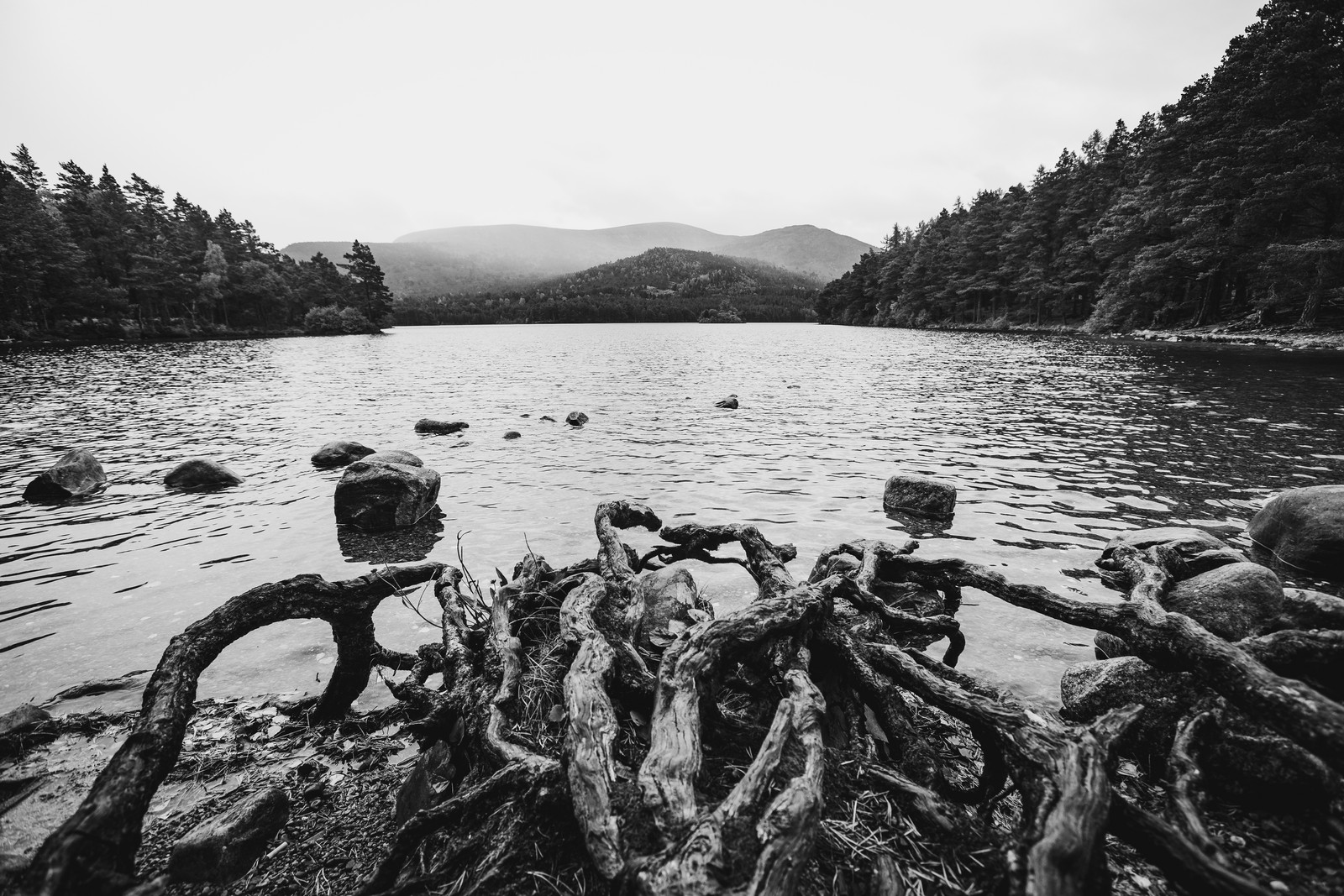 loch-an-eilen-lake-roots