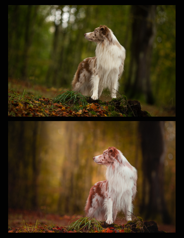 before-and-after-artistic-dog-photography-2