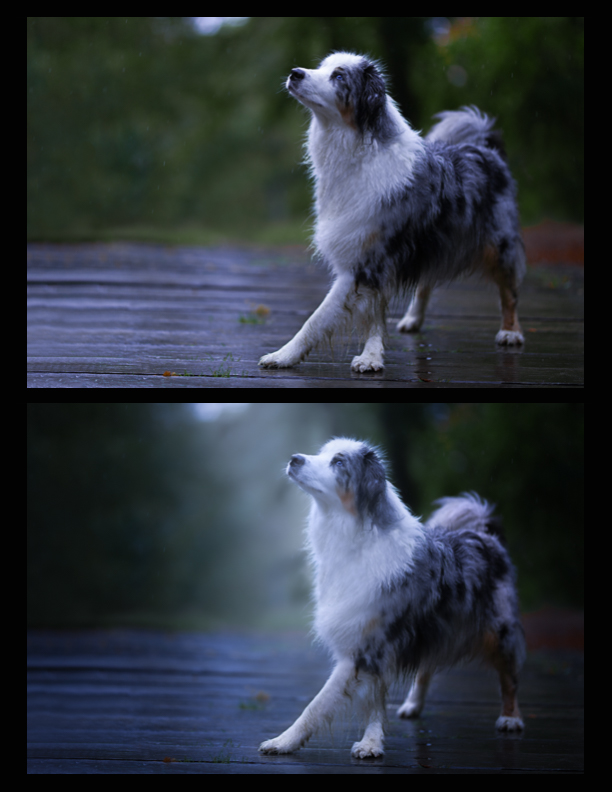 before-and-after-artistic-dog-photography-4