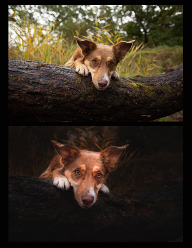 before-and-after-artistic-dog-photography-6