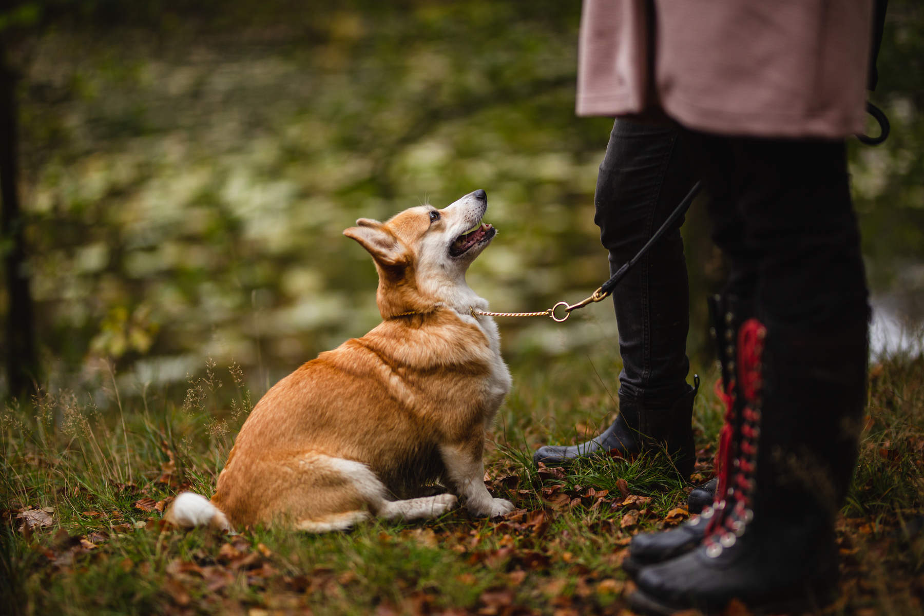 behind-the-scenes-Alicja-Zmys-owska-workshop-dog-photography-01