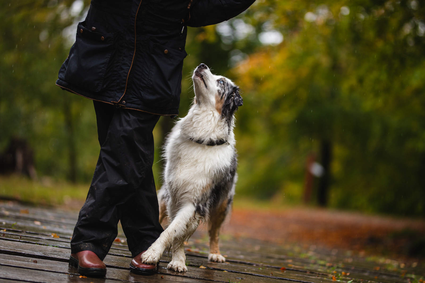 behind-the-scenes-Alicja-Zmys-owska-workshop-dog-photography-02