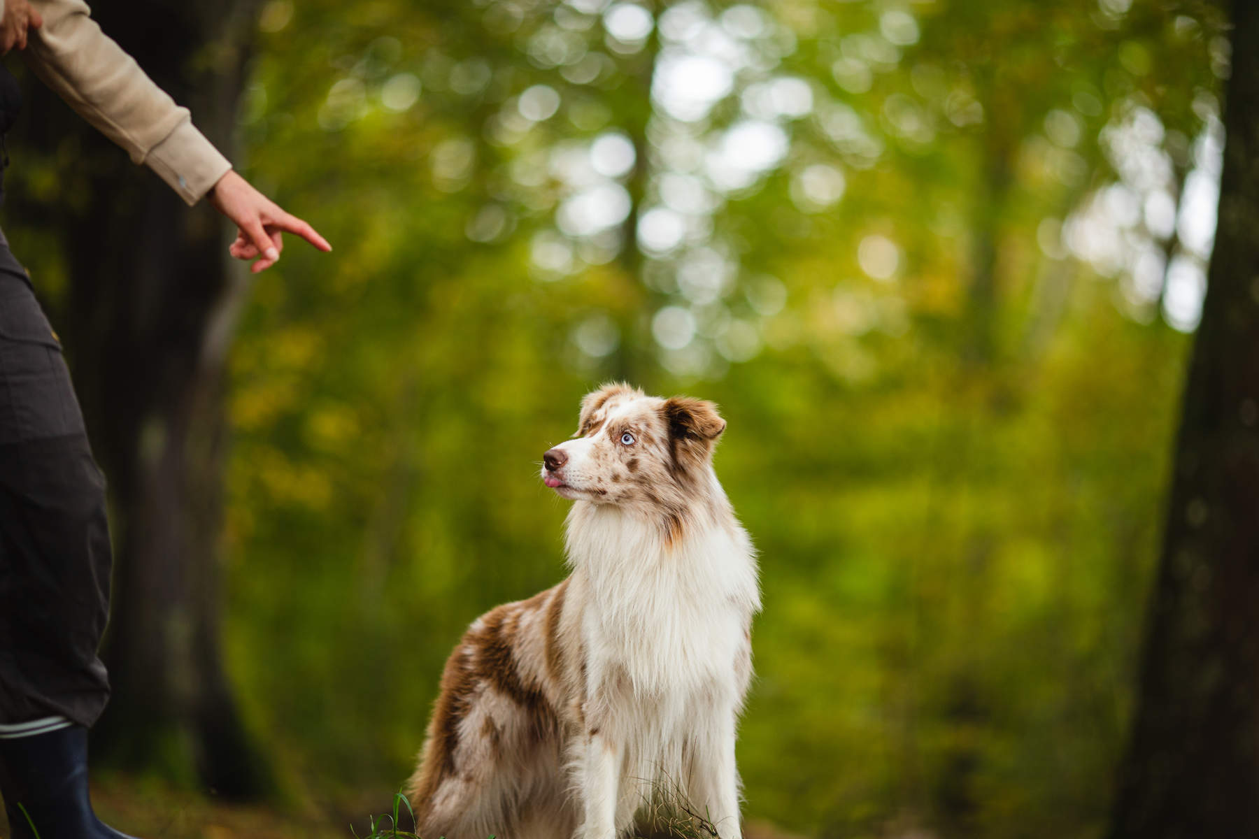 behind-the-scenes-Alicja-Zmys-owska-workshop-dog-photography-03