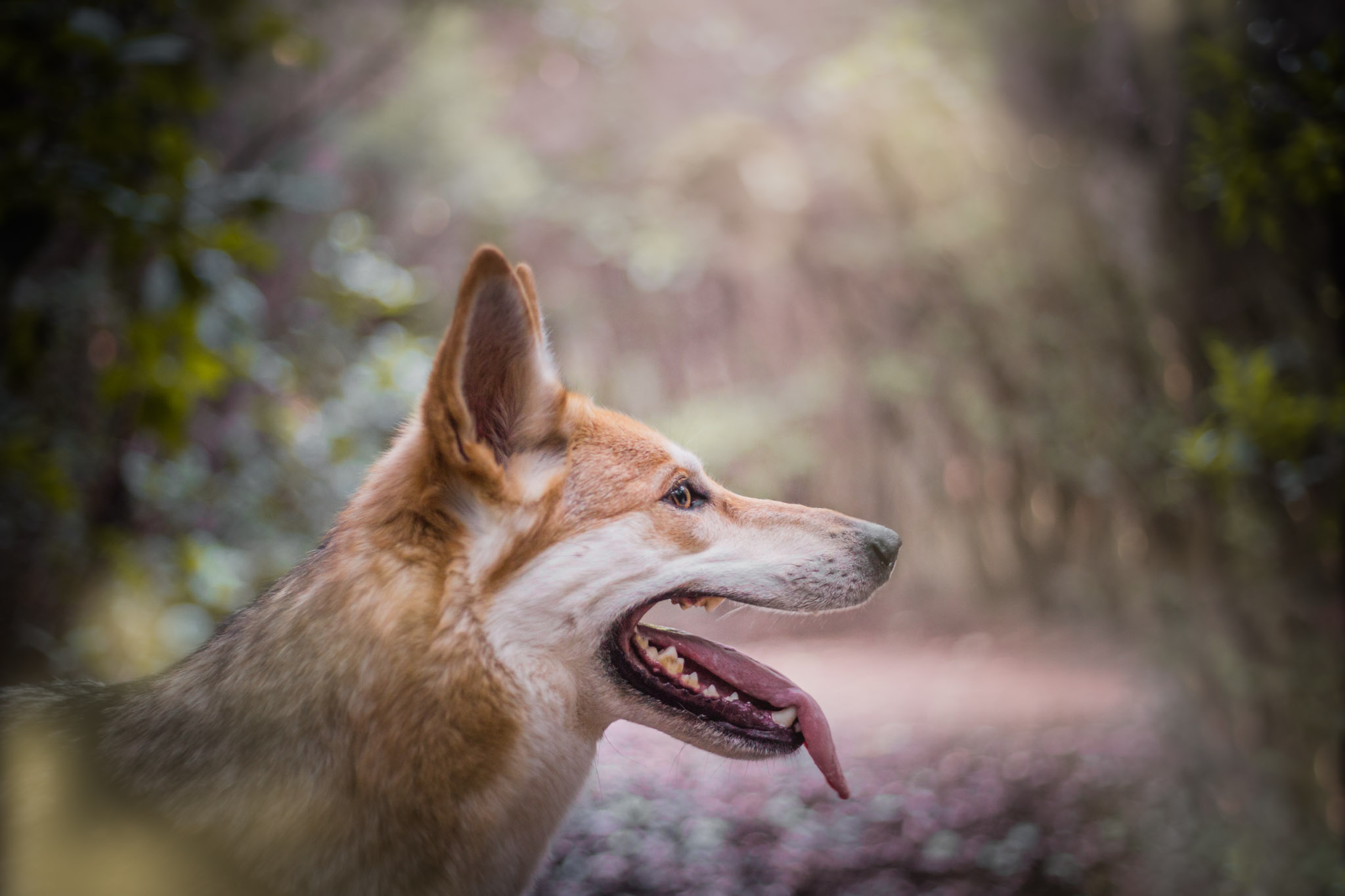 dog-photography-tenerife-the-northdogs-04